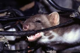 mouse cable eater